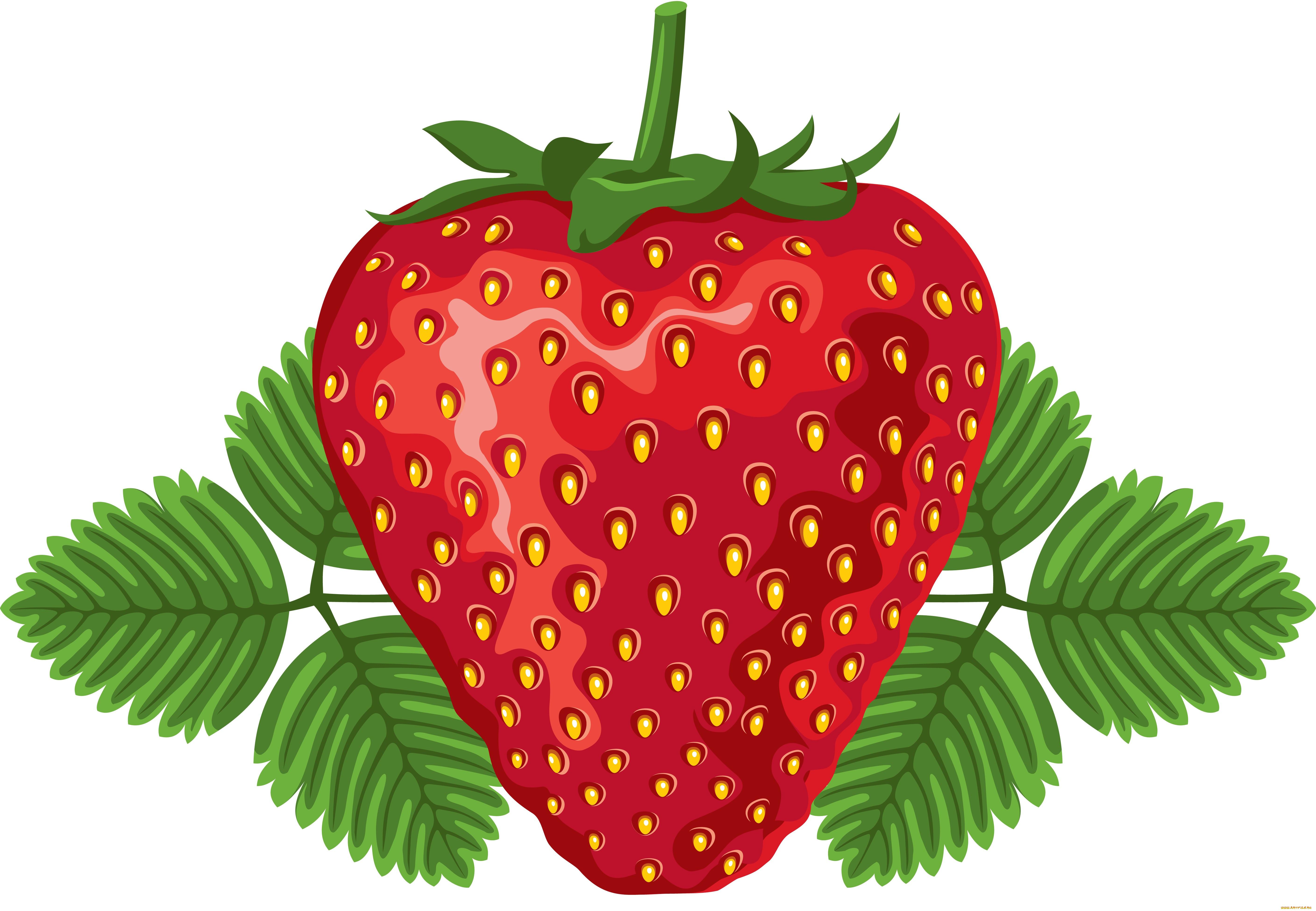 рисунки с ягодами территории